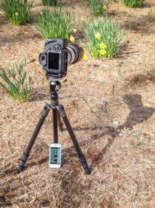 A camera on a tripod, ready to shoot daffodils. An iPhone is next to it, with the camera manual open on it.