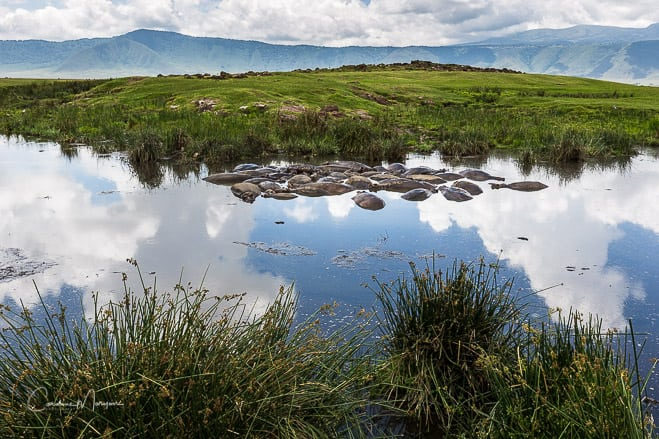 Hippo Pool Landscape