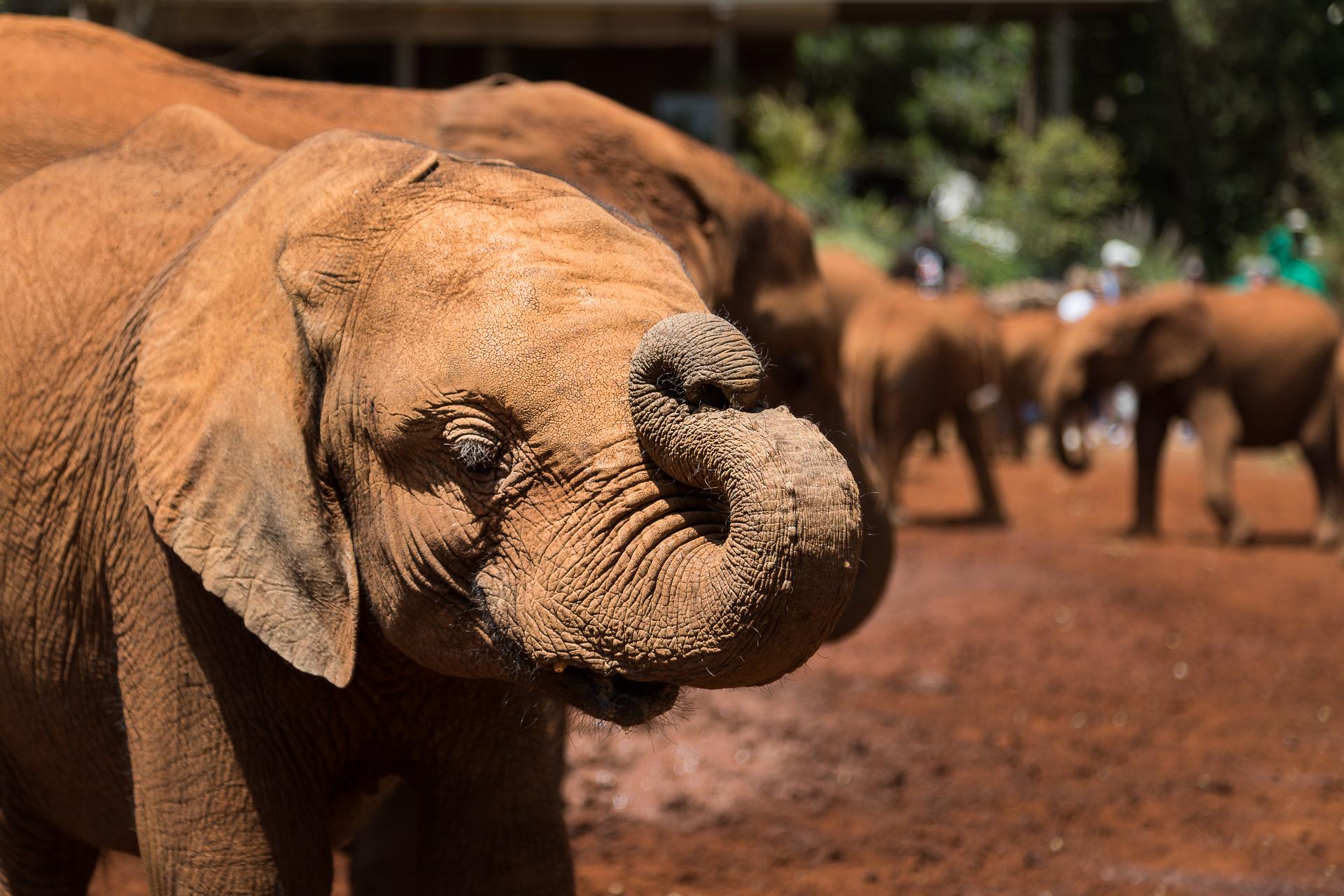 Muddy Baby Elephant