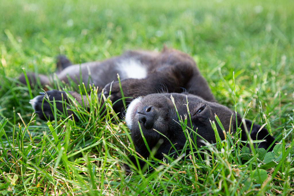 Photo of puppy snoozing in grass