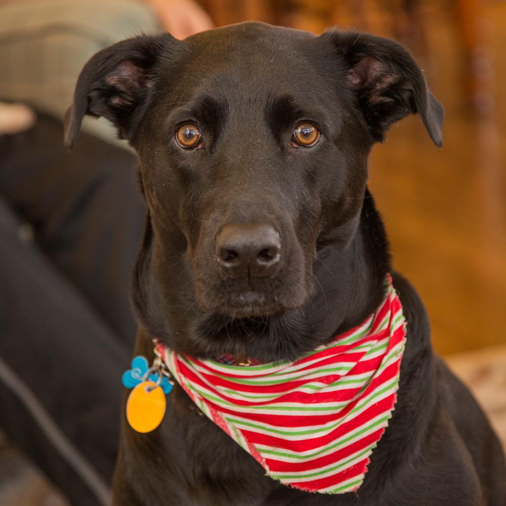 photo of dog at Christmas