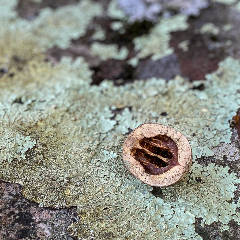Nutshell and Lichen