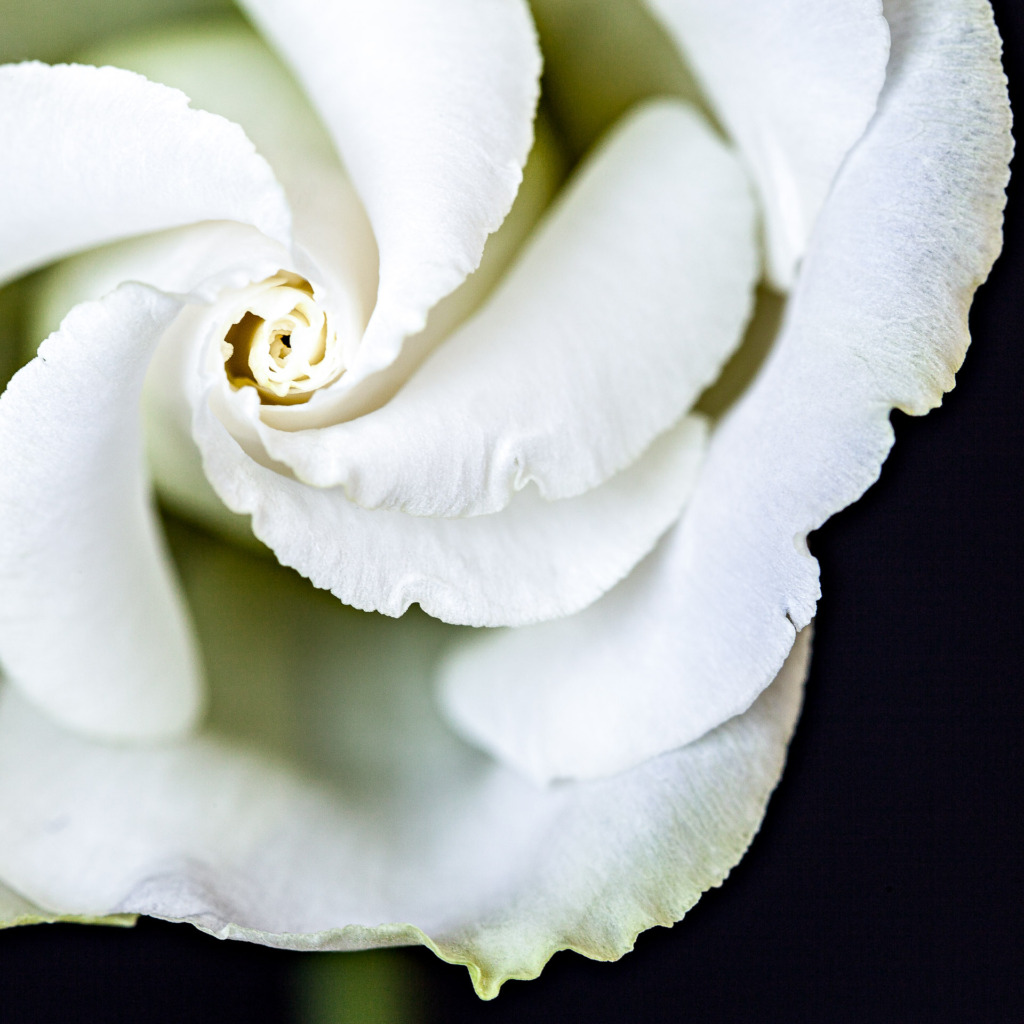 shooting macro photography of a white flower