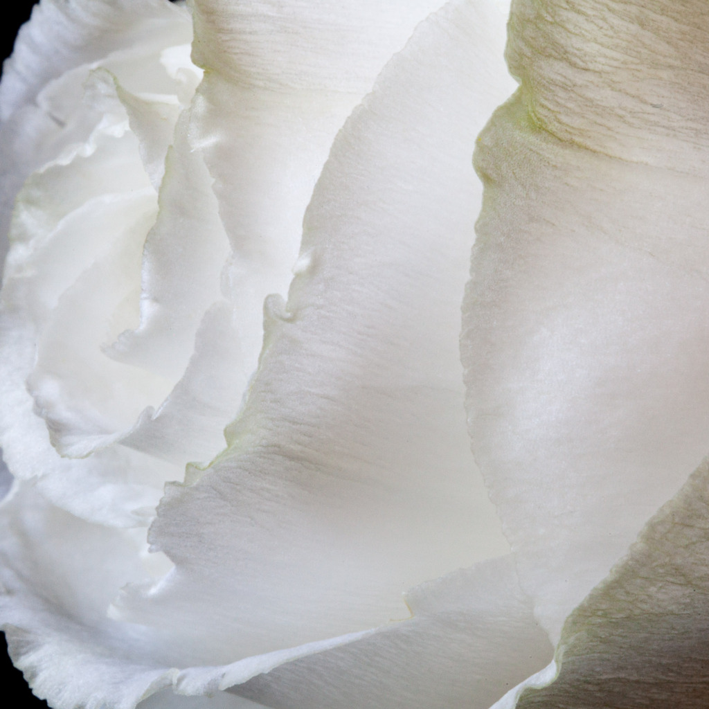 shooting macro photography of white flower petals