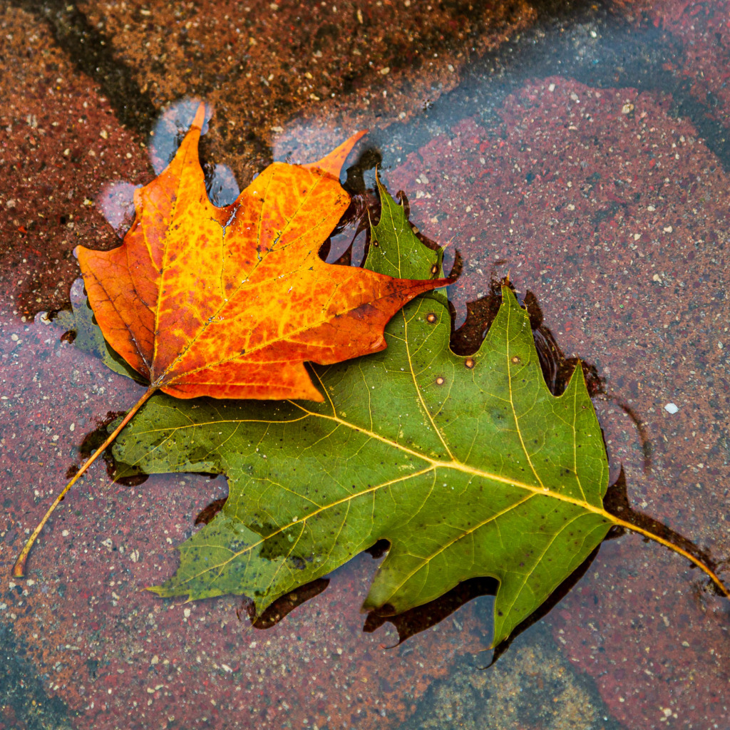 use complimentary colors to make fall colors pop